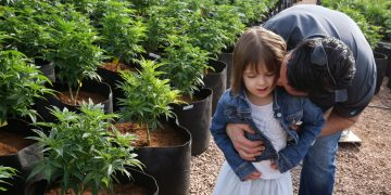 FILE - In this Feb. 7, 2014 file photo, Matt Figi hugs and tickles his once severely-ill seven year old daughter Charlotte, as they walk together inside a greenhouse for a special strain of medical marijuana known as Charlotte's Web, which was named after the girl early in her treatment for crippling severe epilepsy, in the mountains west of Colorado Springs, Colo. Colorado is poised to award more than $8 million for medical marijuana research, a step toward addressing complaints that little is known about pot's medical potential. Among the research projects poised for approval on Wednesday,  Dec. 17, 2014, are one for pediatric epilepsy patients, and another for children with brain tumors. (AP Photo/Brennan Linsley, File)